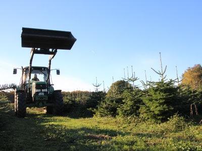 Weihnachtsbäume Großhandel